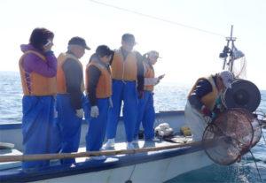 タコ釣り体験